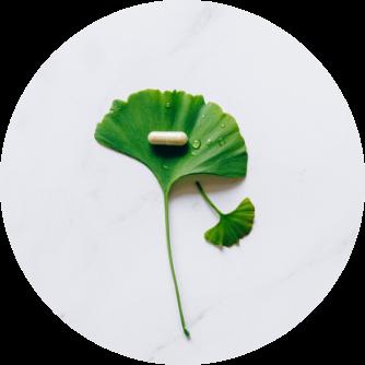 Ginkgo biloba Extrakt Anti-Aging
